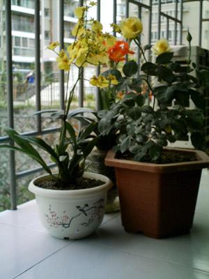 室内下水管养植物